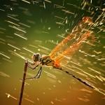 dragonfly-branch-rain_45672_990x742