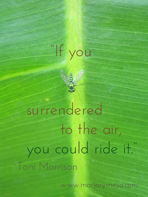 "full moon surrender. ""If you surrendered to the air, you could ride it."" Toni Morrison"