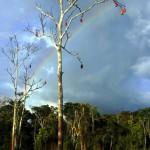 rainbow.sacredflow