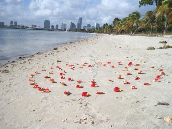 ocean ritual with rose petals