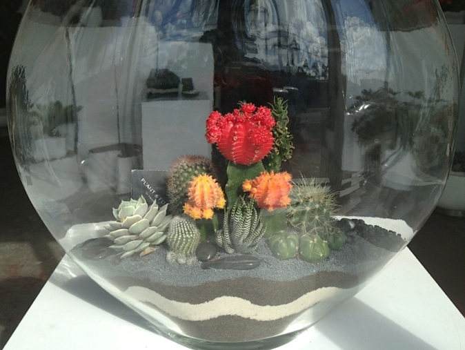 flowers in terrarium cacti
