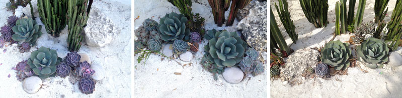 collage.garden.plants