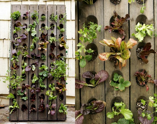 ediblewall for the home