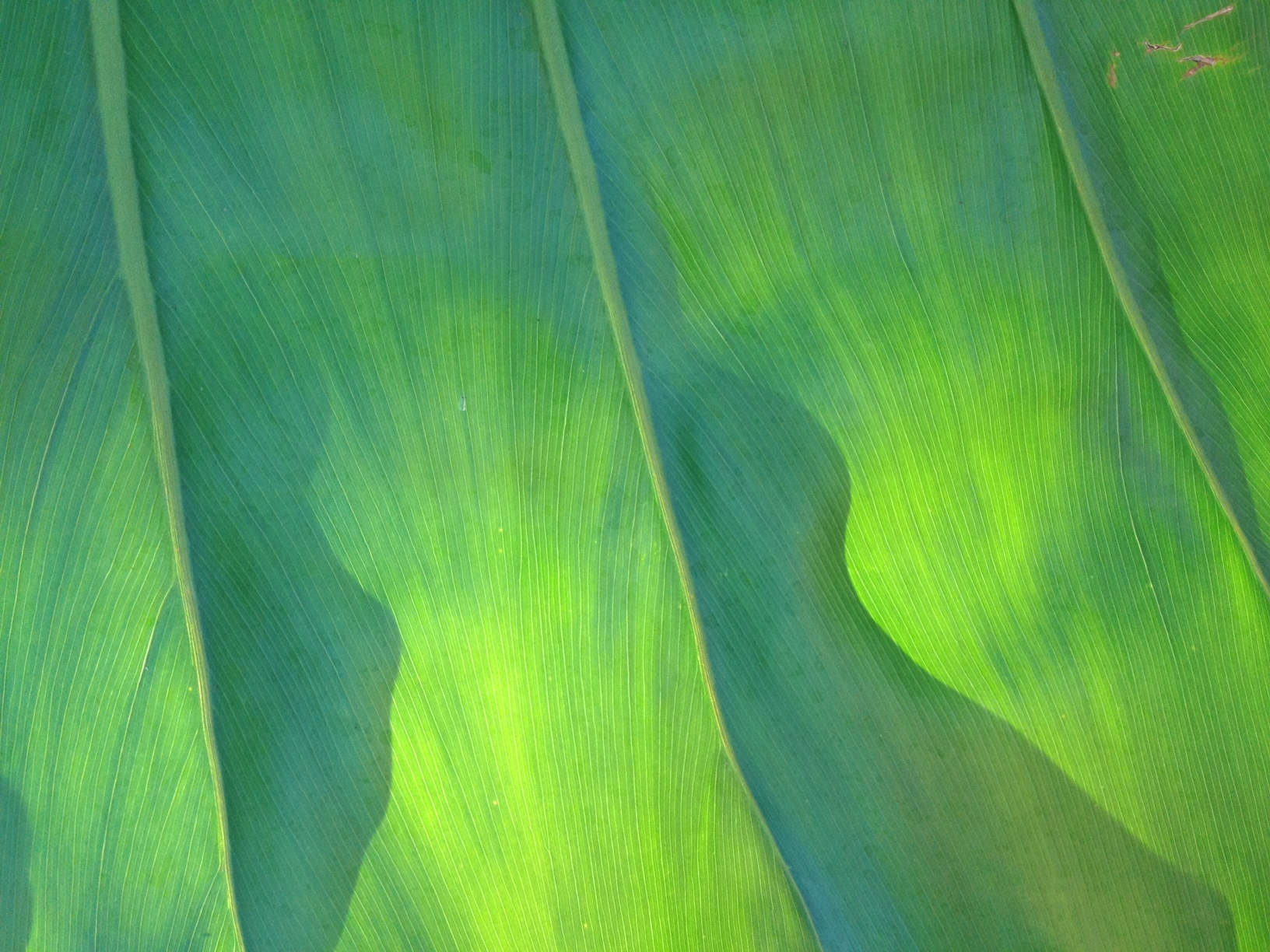 leaf at the university of miami by marjory mejia. sacred flow