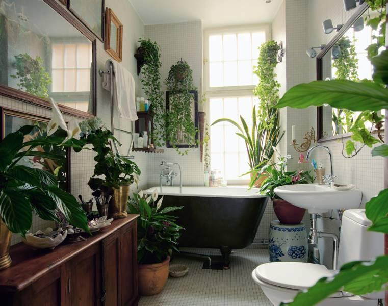 plants bath