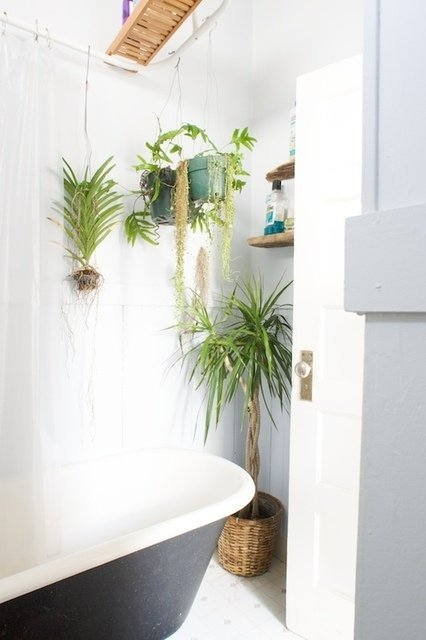Air plants in the bathroom!
