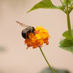 bees, honey and life