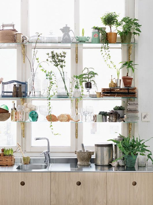 Happiness is a kitchen with plants...and your things...