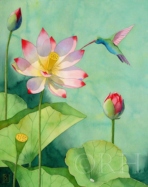 lotus and hummingbird