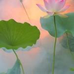 lotus spirituality