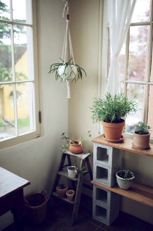 plants at home via kinfolk
