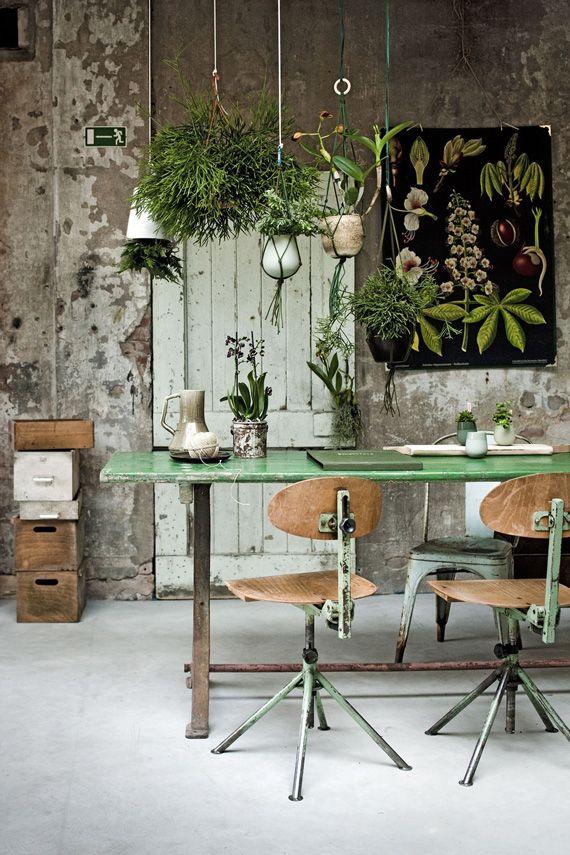 plants dining room art