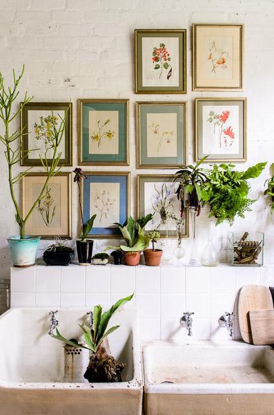 adriaan louw plants