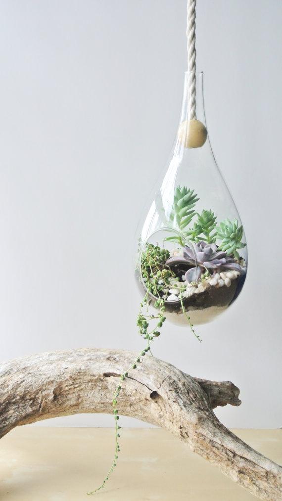 zensucculent