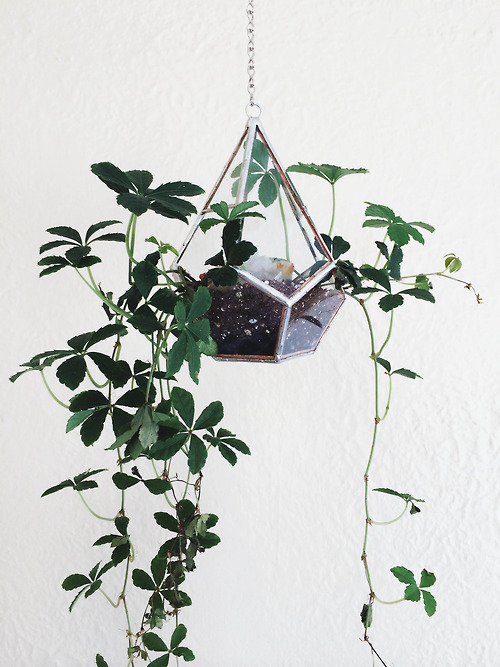 Geometric planter and gorgeous plant