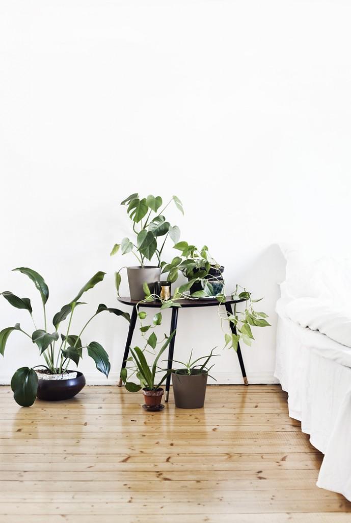 towards the light plants