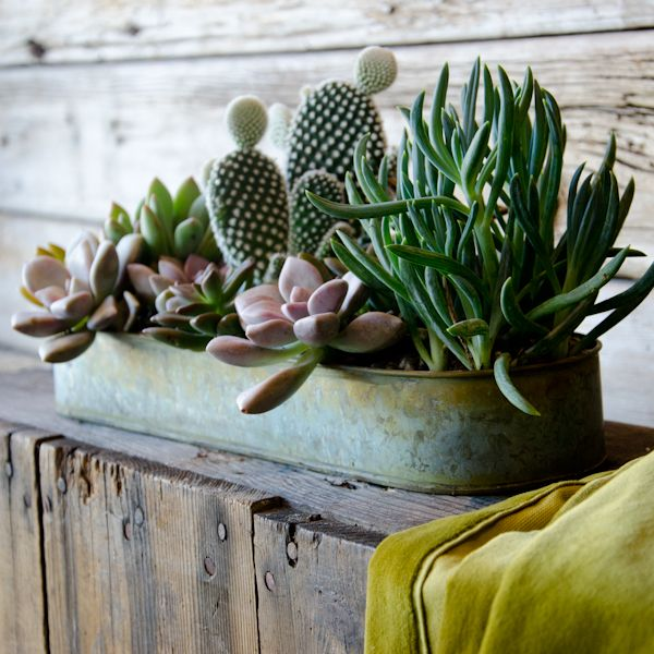 succulent tray via indulgy