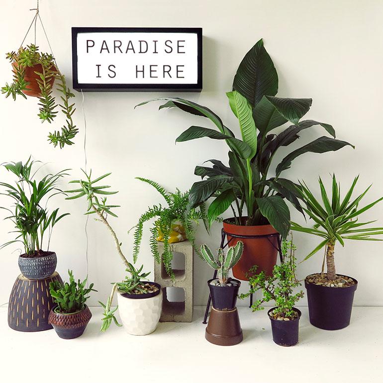 01-Paradise