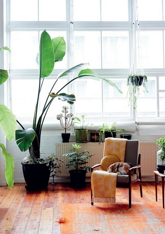 Lovely plant corner of Kelly Thompson via urbis | awakening sacred flow