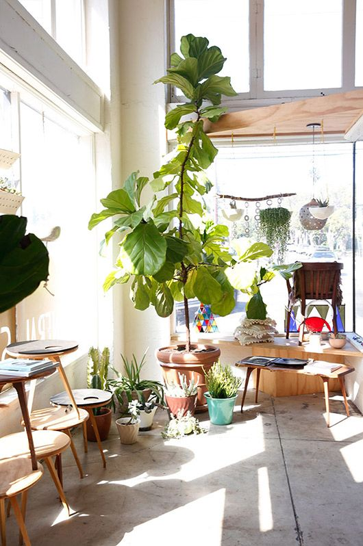 light filled space with plant via sfgirlbybay |awakening sacred flow