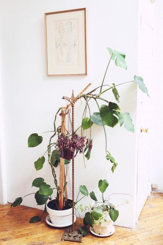 wild plant via talesofendearment |awakening sacred flow